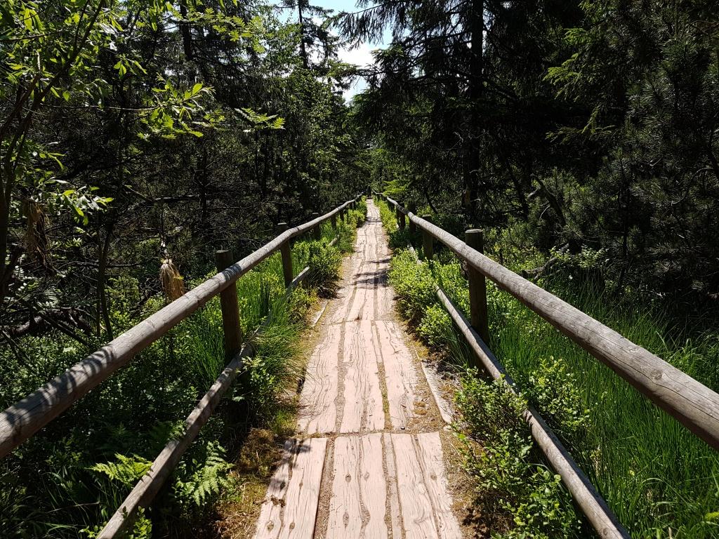 Bohlenweg am Hohloh-See