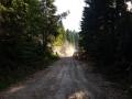 Waldarbeiter zugange