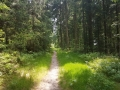 Waldpfad kurz vor der Alexanderschanze