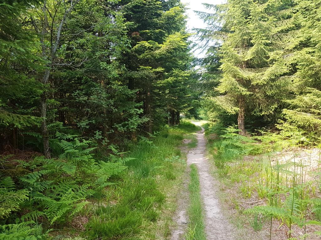 Schöne Waldwege