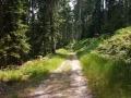 mehr schöne Waldwege