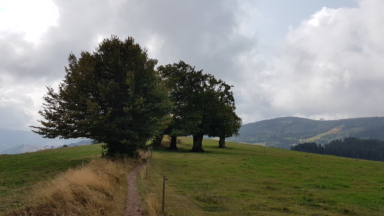 Über Hof Jetzenwald