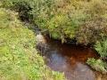 Naturschutzgebiet Langenbachtal